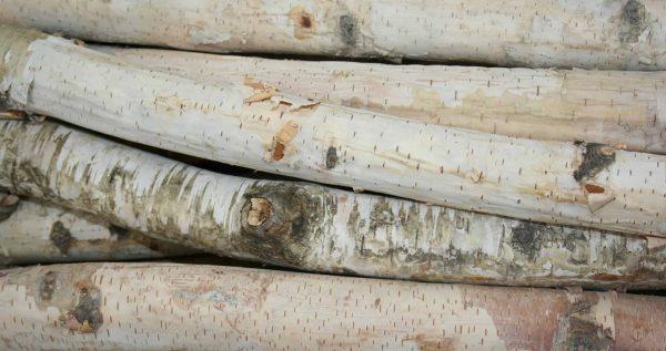"Birch logs 1"" to 1.5'' x 18'' Long - Set of 12 logs 2"